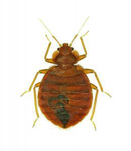 boise bed bugs control
