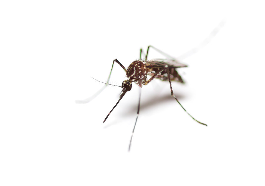 middleton mosquito control, middleton mosquito extermination, dangers of middleton mosquitoes, idaho mosquito control