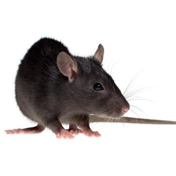 fruitland mice control, fruitland mouse control, fruitland mice exterminator, fruitland moue exterminator
