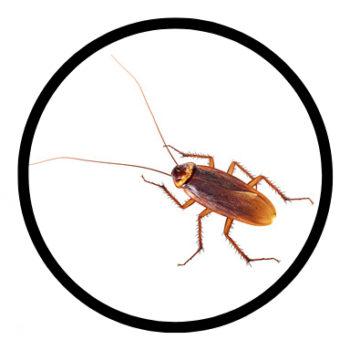 cockroach-0