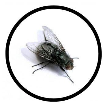 fly-0