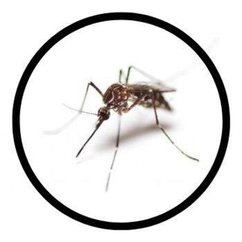mosquito-0