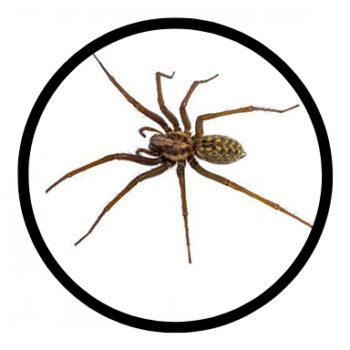 spider-0